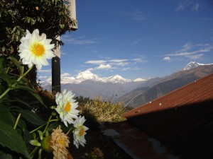 Blumen in Ghore Pani
