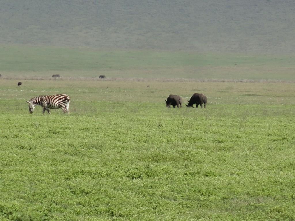 Nashörner im Ngorongoro Krater