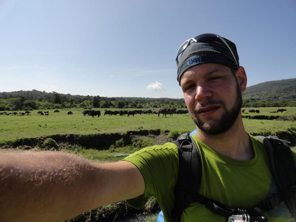 Büffelherde in der Ebene vor Mt. Meru