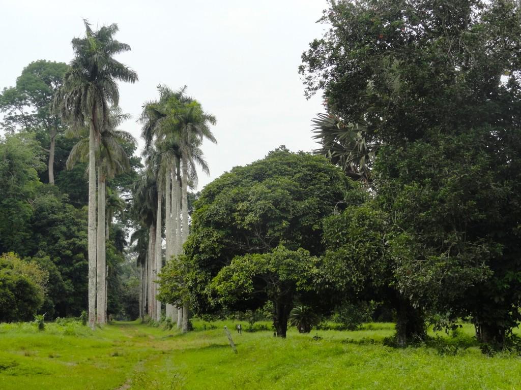 Botanical garden in Mbandaka