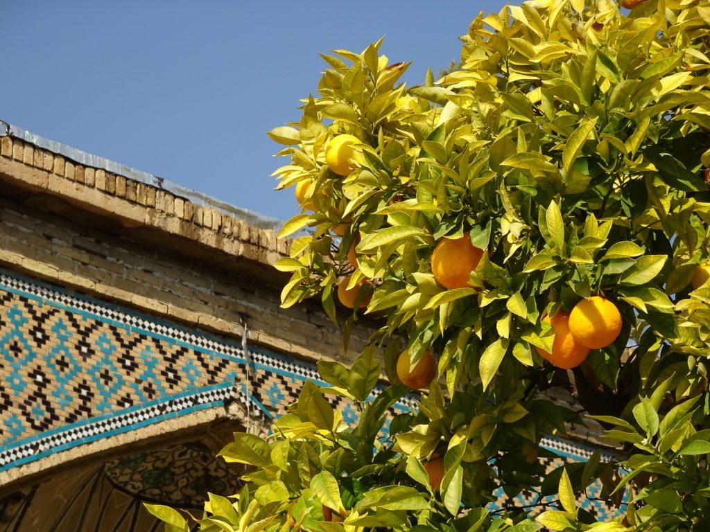 Orangen am Grab von Hafez