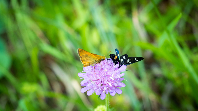 Schmetterlinge an den Plitvicer Seen