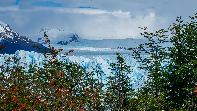 Natur am Perito Moreno Gletscher