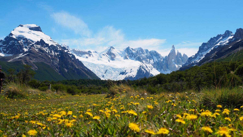 Cerro Torre und Blumen