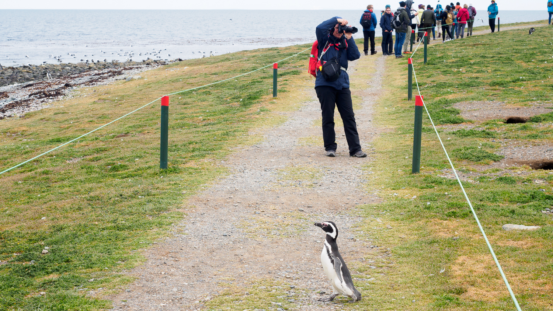 Pinguin-Übergang