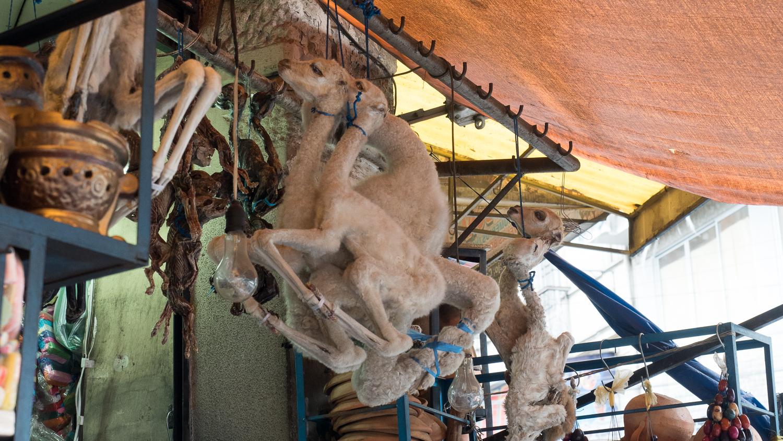 Lama Fötus auf dem Hexenmarkt