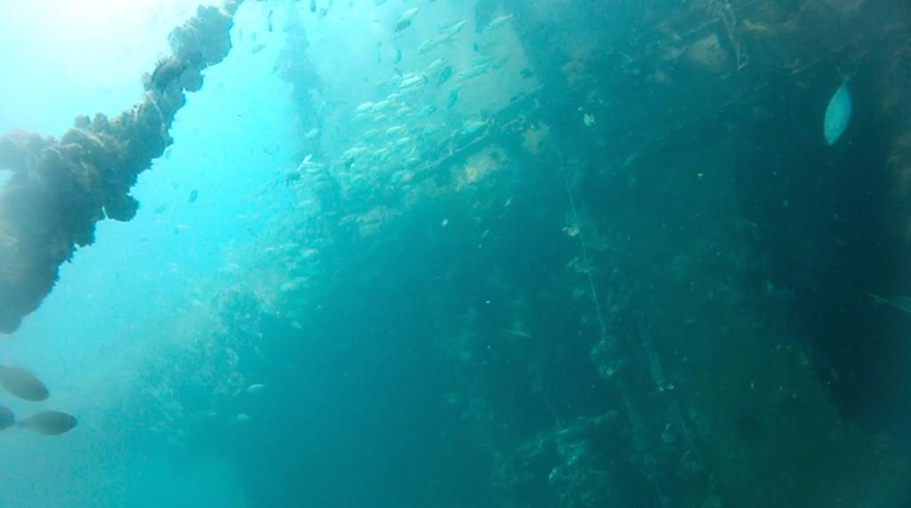 Fischschwärme am Sugarwreck