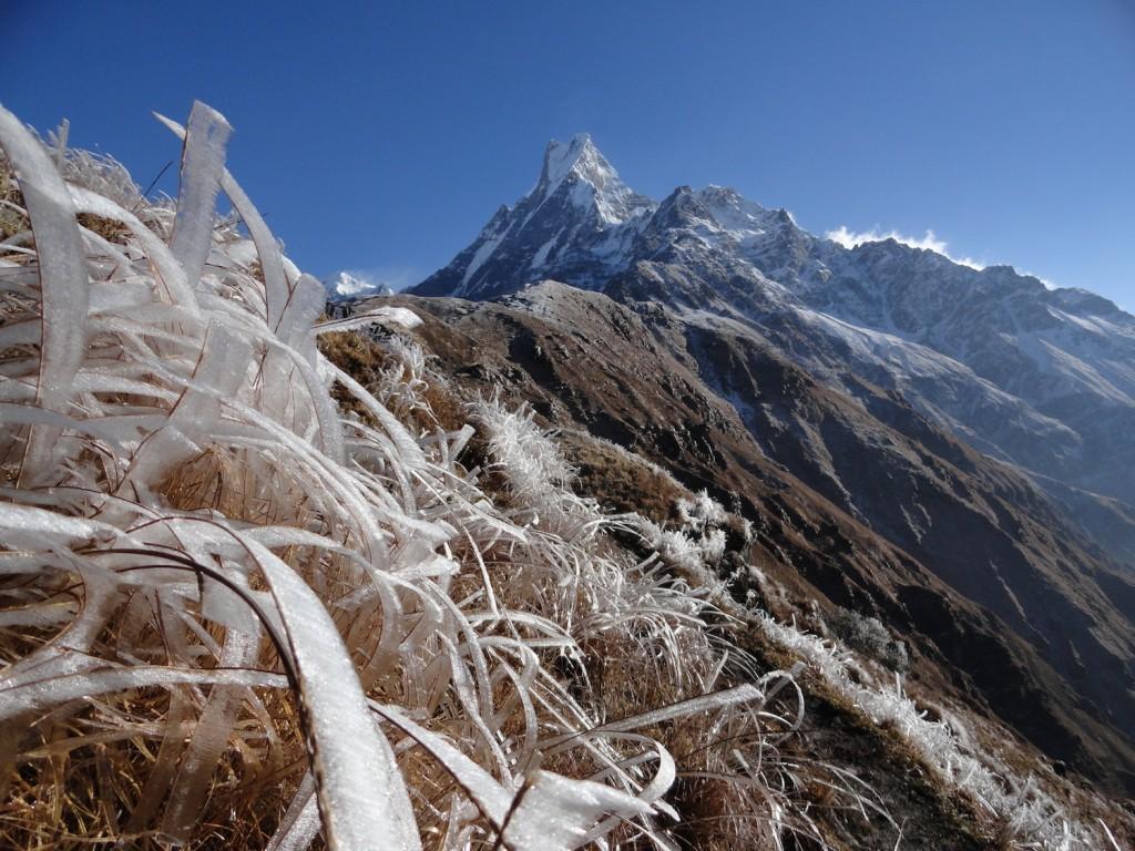 Eisfahnen an Grashalmen am Machapucharé