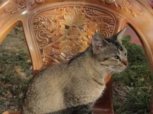 Katze im White House Unawatuna