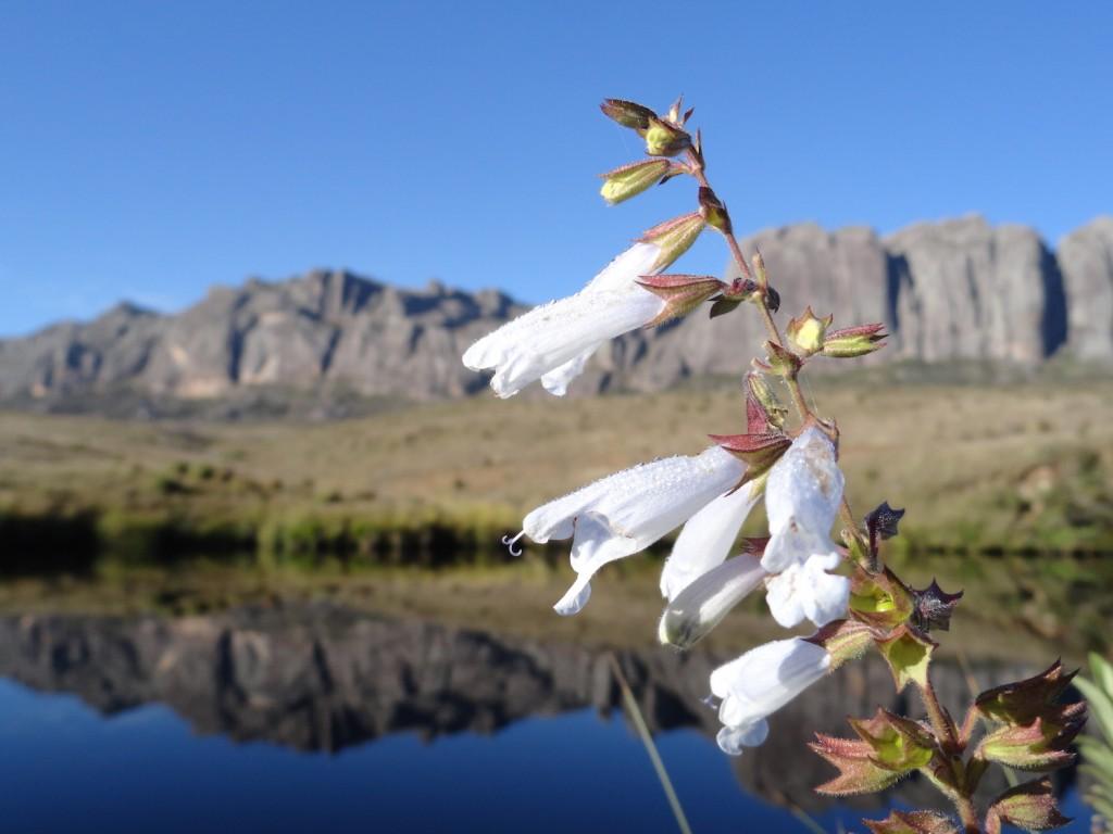 Blumen im Andringitra Nationalpark