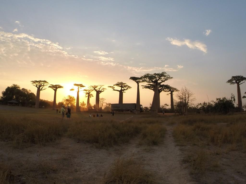 Sonnenuntergang auf der Allée des Babobas
