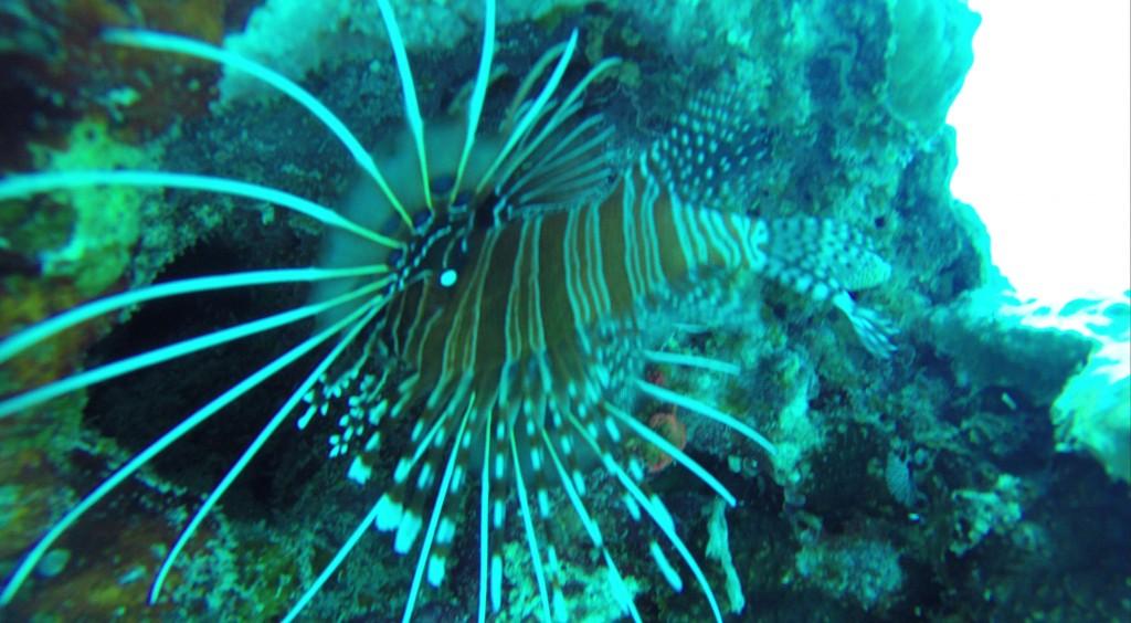 Fisch vor Mauritius