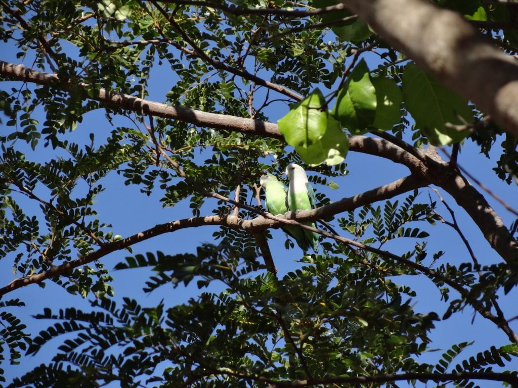 Papageien im Isalo Nationalpark