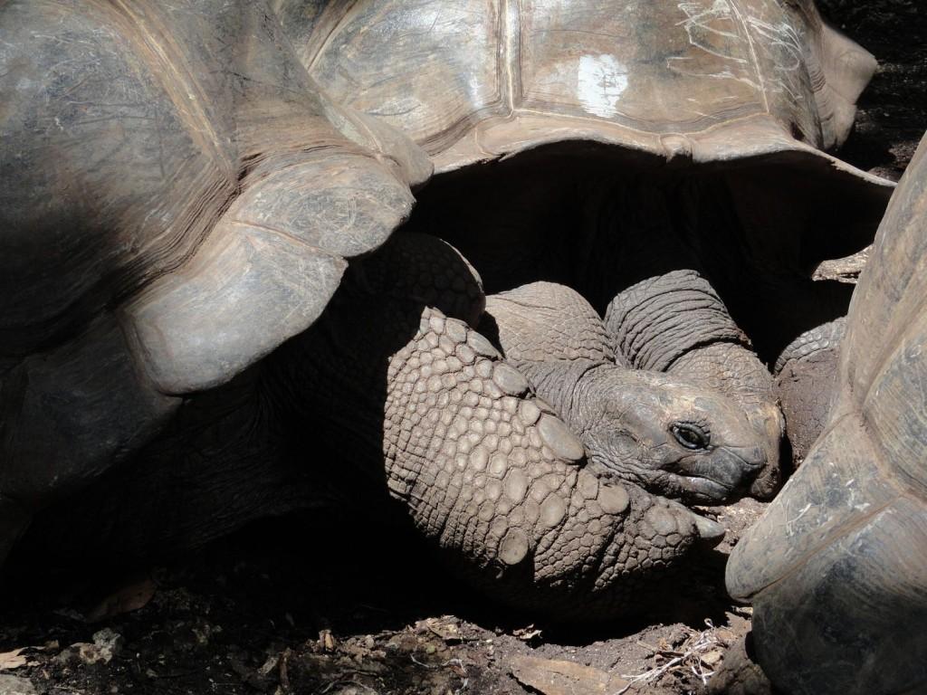 Schildkröten auf der Gefängnisinsel