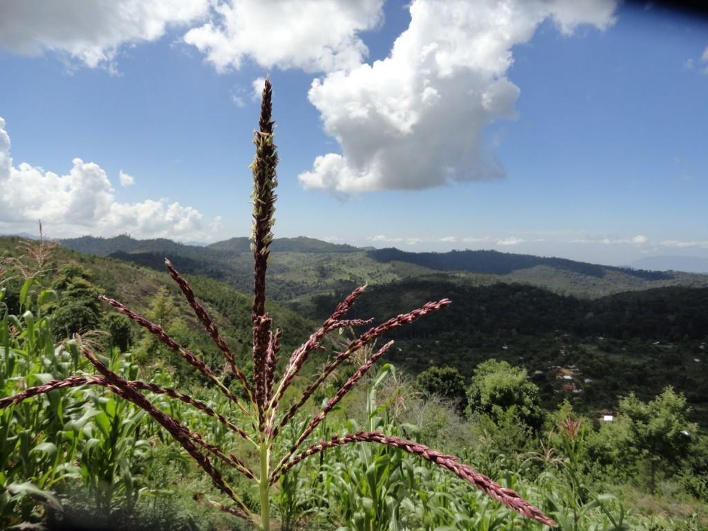 Blick über die Usambara Berge