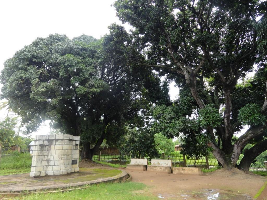 Dr. Livingstone Memorial - Livingstone und Stanley trafen sich unter diesen Mangobäumen