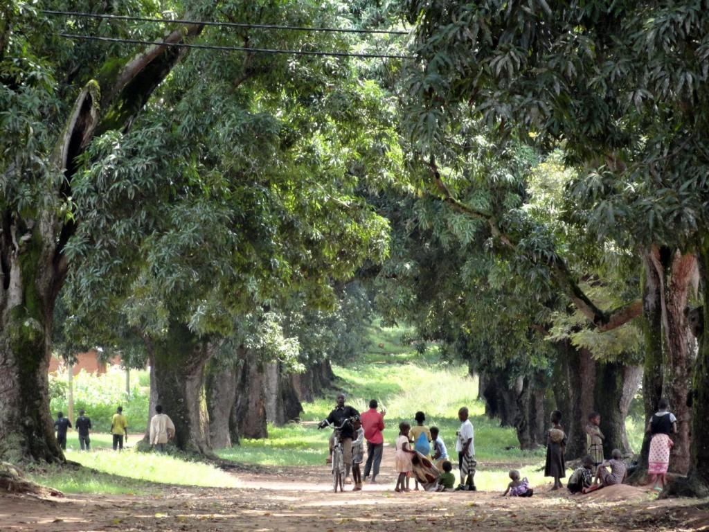 Beginn der Sklavenstraße - Mangoallee