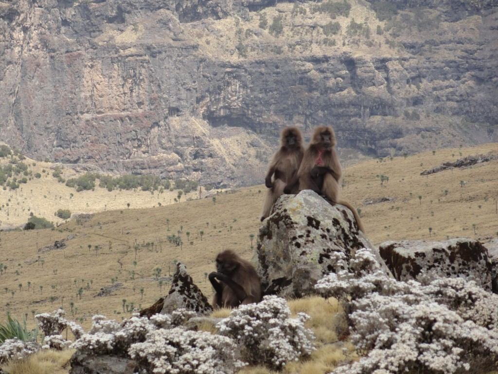 Dscheladas auf den Bergen