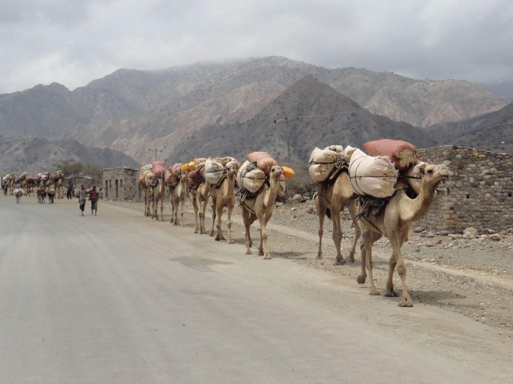 Kamel-Karawane -  auf dem Weg in die Danakil-Senke