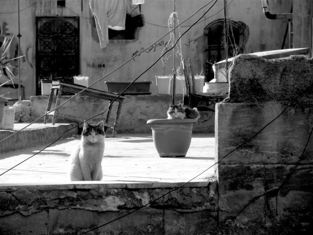 Katzen auf den Dächern