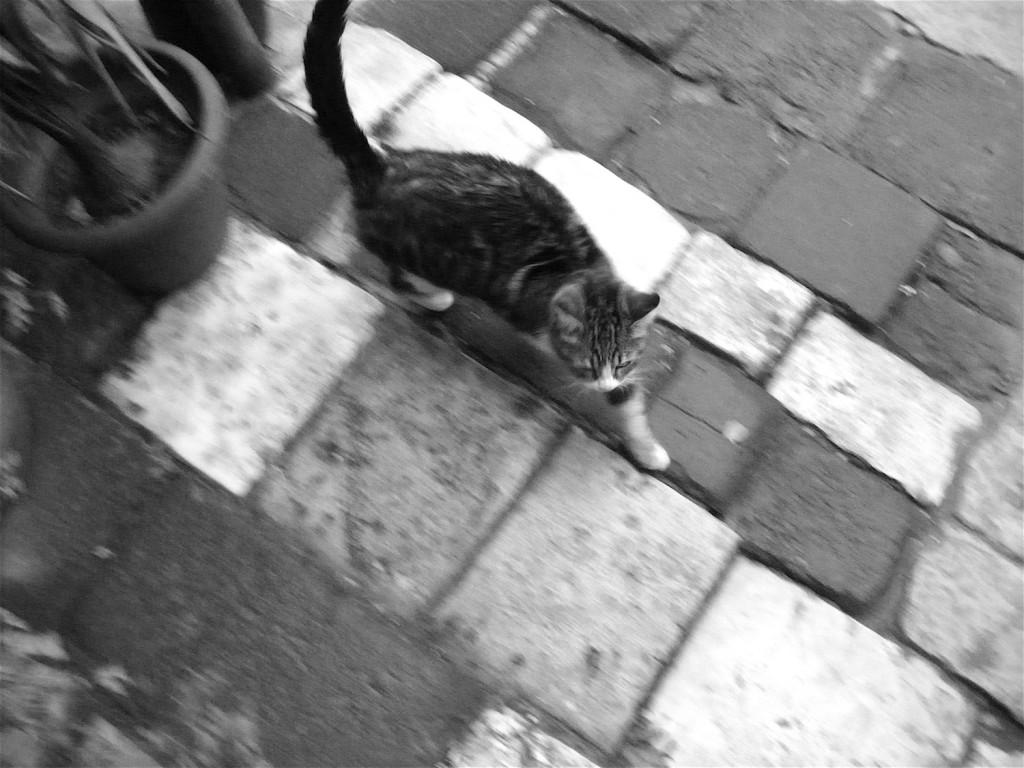 Katze auf den Straßen Damaskus