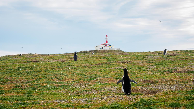 Leuchtturm auf Isla Madgalena