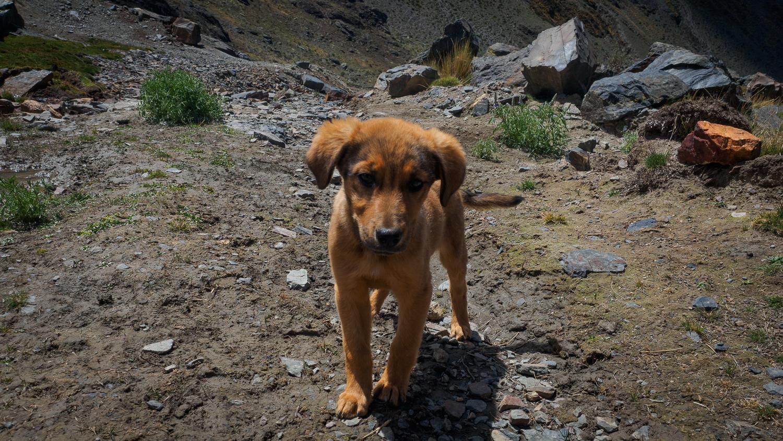 Wanderhund