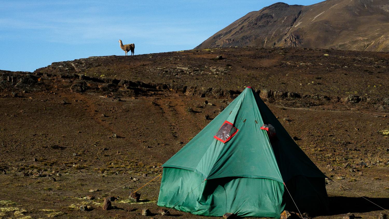 Zelt und Alpaka