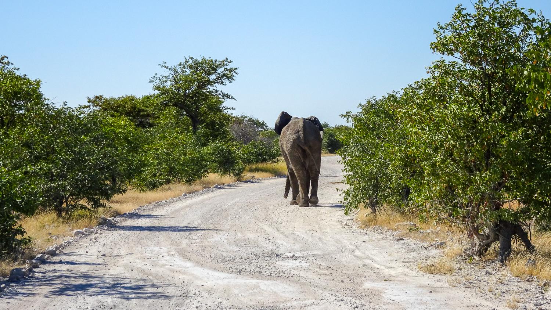 Elefant im Straßenverkehr