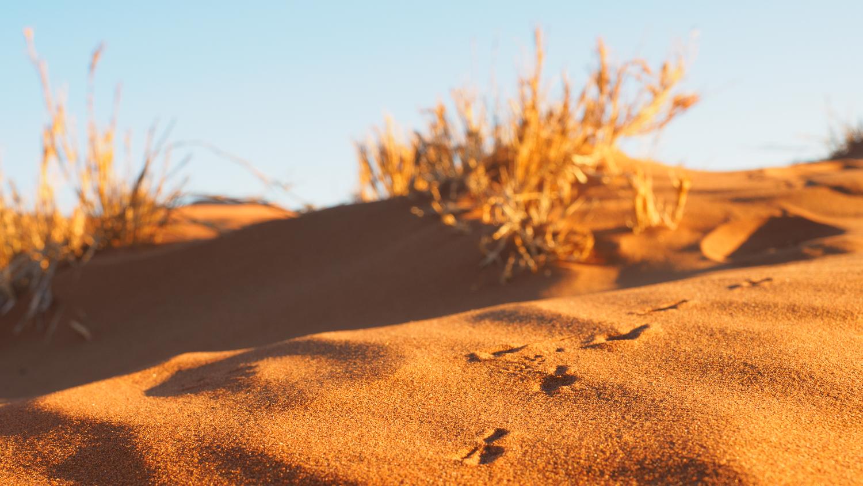Sand im Sossusvlei