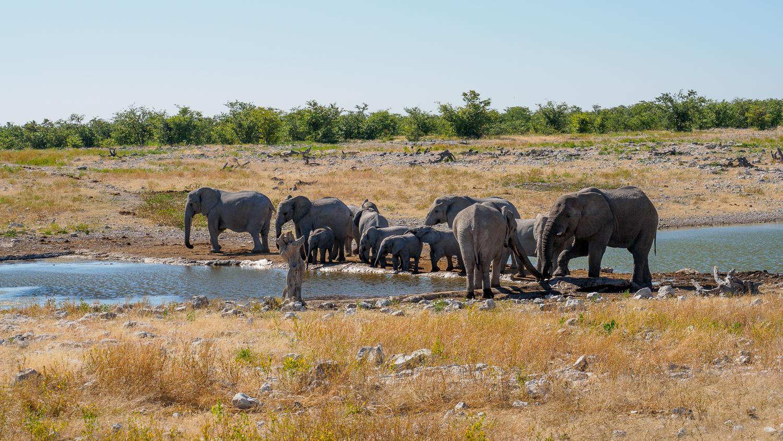 Elefanten im Etosha-Nationalpark